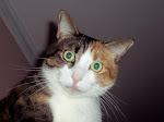 Minnie : Gatto delle Civette !
