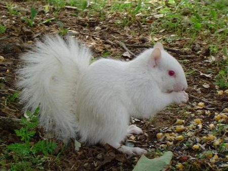 [albino+squirrel8.jpg]