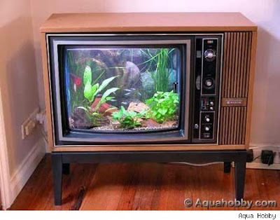 craziest fish tank