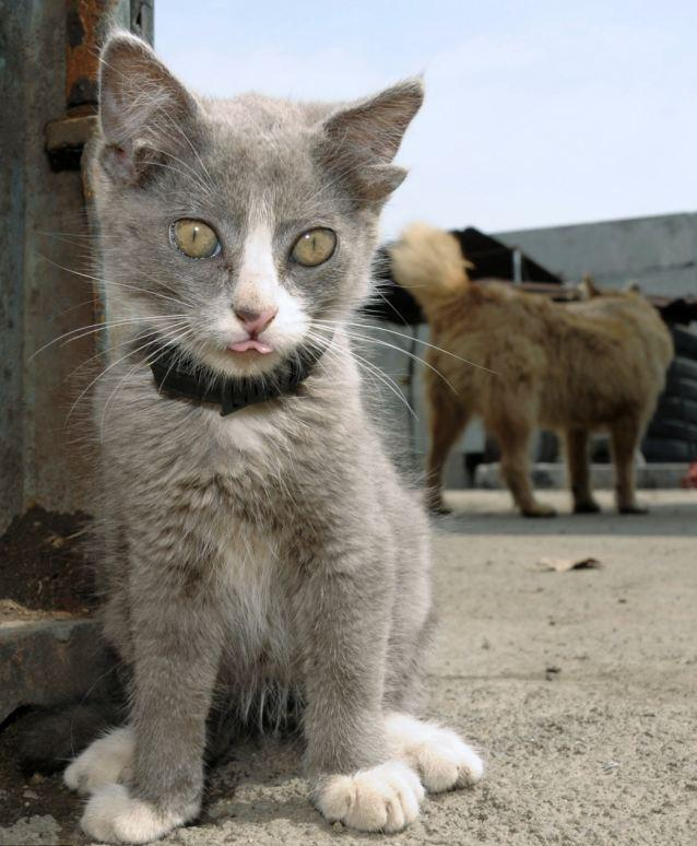 Amazing Cat: SOMETHING AMAZING: Amazing Cat With Four Ears