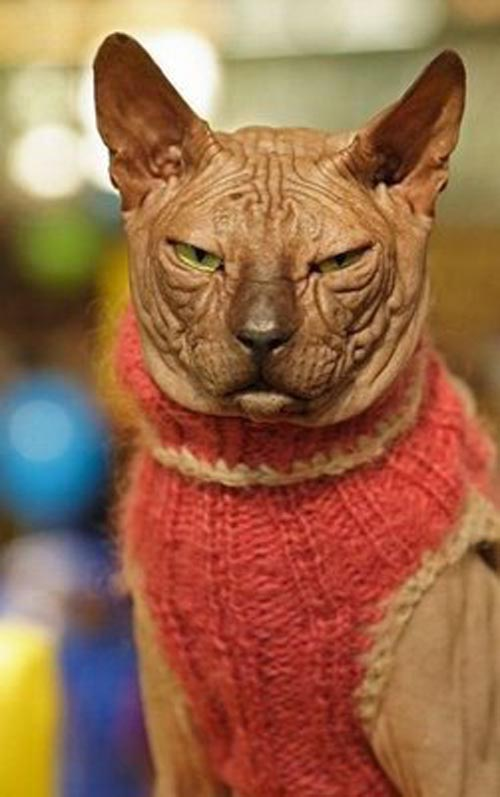 Ugly Hairless Cat Pictures