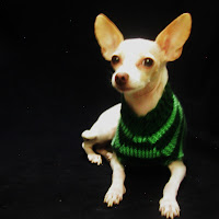 Green striped dog sweater