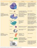 evolution essays on aspects of evolutionary biology