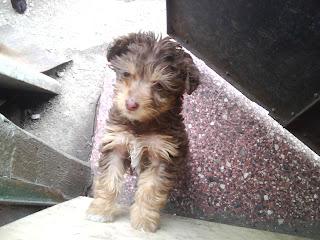 Móvil de castración de mascotas-montevideo