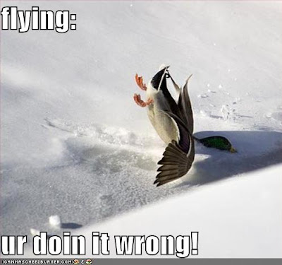 funny-pictures-duck-falls-snow.jpg