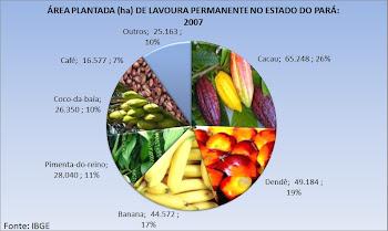 Lavoura Permanente no Pará: 2007