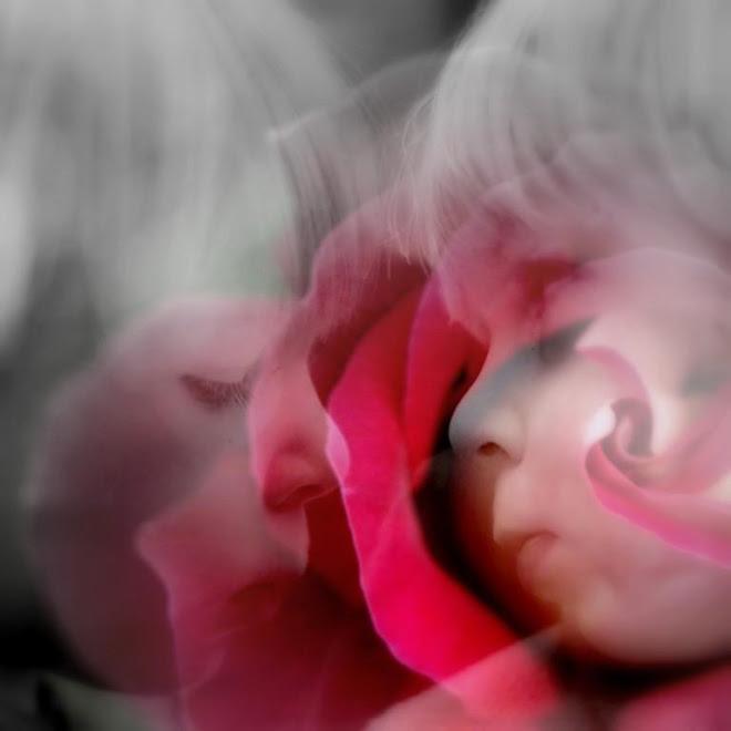 Franio w róży...