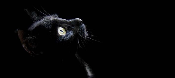 Resultado de imagen de animales paranormales