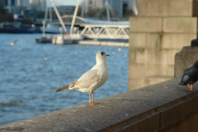 A bird perched on the banks of the Thames