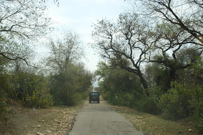 Road inside Sariska