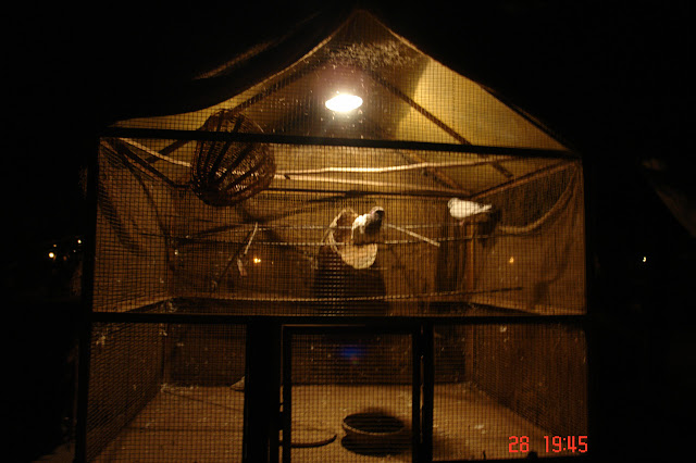 A photo of a cage with birds in the tourist village of Chokhi Dhani