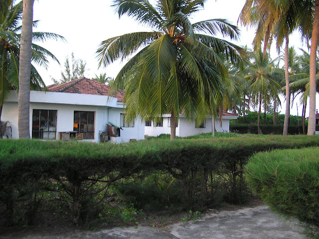Coconut or palm trees and white cottages in Lakshadweep, with hedges on the ground