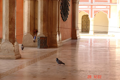Pigeon making its way on the smooth floor inside the Jaipur City Palace