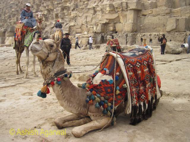 Cairo Pyramids - Camel for a leisure ride
