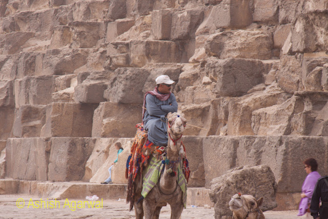 Cairo Pyramids - waiting for a tourist to hire the camel, in front of the Great Pyramid