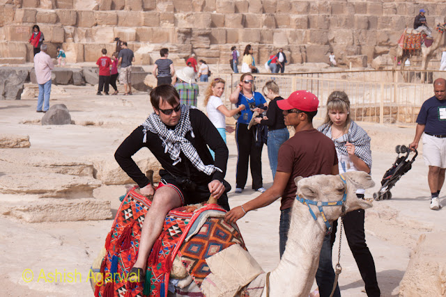 Cairo Pyramid - Tourist trying to climb a decorated camel right next to the Great Pyramid