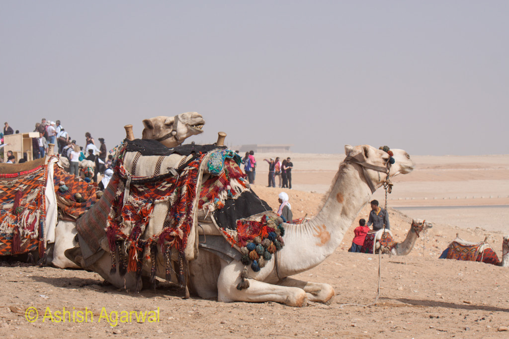 A decorated camel waiting for tourists at the Panorama point in Giza, in the desert