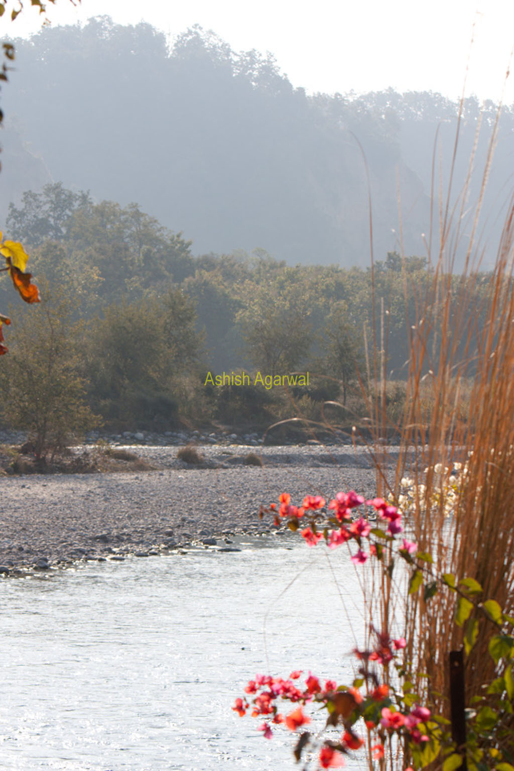 Flowers at the Kosi river next to the Corbett National Park in North India