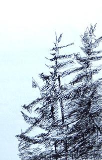 Pen and Ink sketches - Nancy Van Blaricom