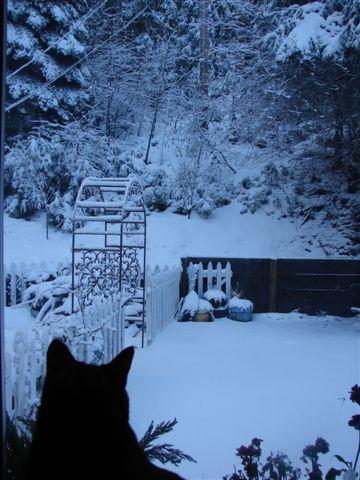 [First+Major+Snow+at+Pollock+Pines+016.jpg]