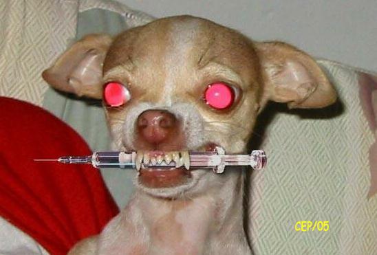 [Dog-needle.jpg]