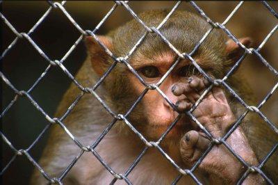 le-point-de-vue-du-wwf-concernant-lexperimentation-animale-aurait-change