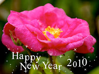 new year roses pictures