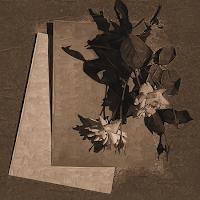 http://digiscrapbykrl.blogspot.com/2009/07/rose-brown-papers.html