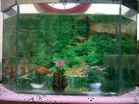 Aquarium setebal 3ml dengan ukuran 40x60 cm dengan harga Rp.50.000 ...