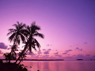 wallpaper pokok kelapa