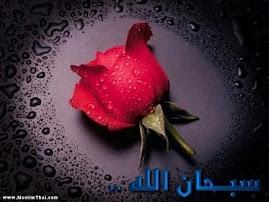 seindah mawar beerduri