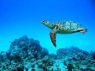 احلى صور للبحر الاحمر والغطس 2005_09_Cozumel%242B035