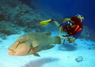 احلى صور للبحر الاحمر والغطس Diverwithfish2