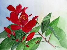 Rode Vietnamese bloem (te koop)