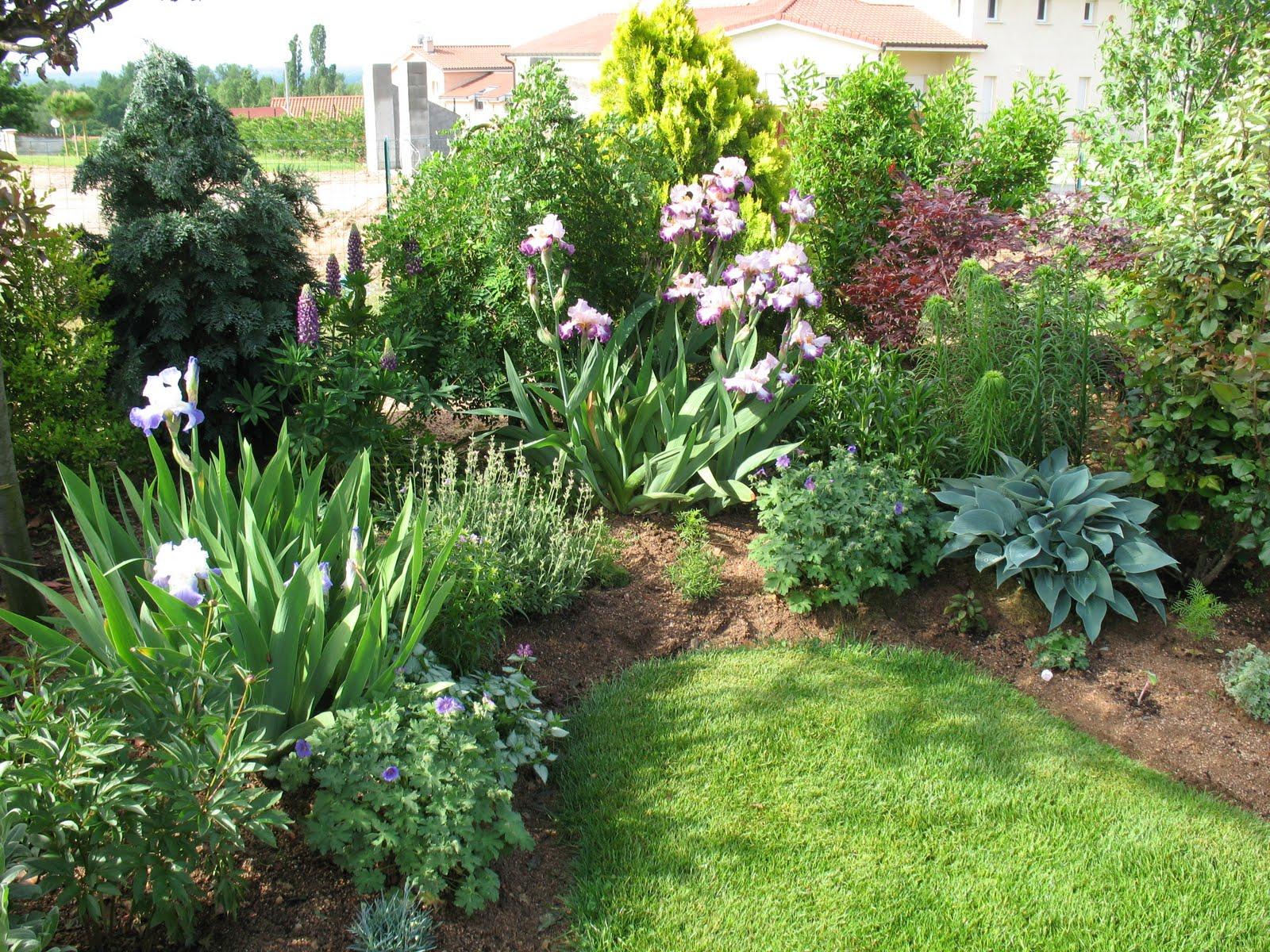 Roses du jardin ch neland les iris for Jardin 7 17