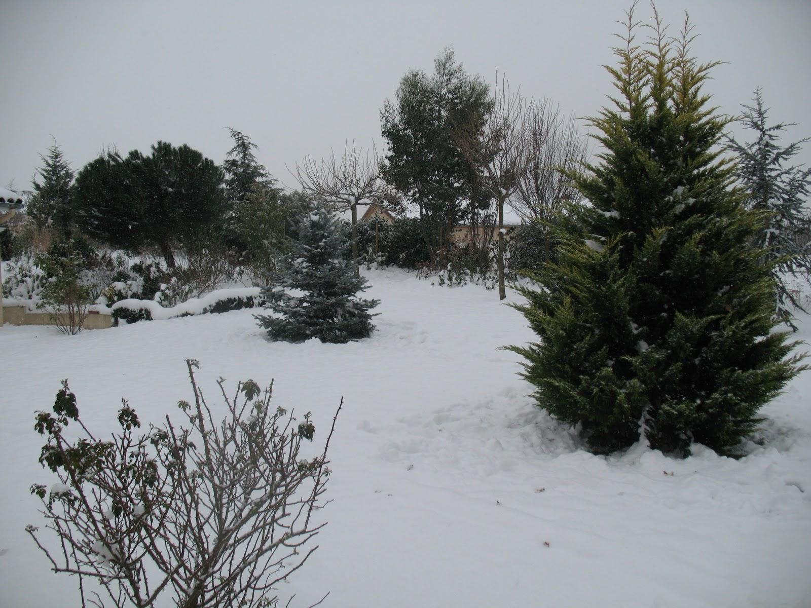 Roses du jardin ch neland la magie du blanc - Jardin de chen ...