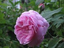 &#39;Prince Napolon&#39;