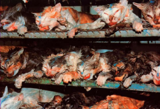 an analysis of the topic of vivisection experimentation on the animal species Browse animal testing news, research and analysis from the on discarding a section of its law on animal experimentation in the topic.