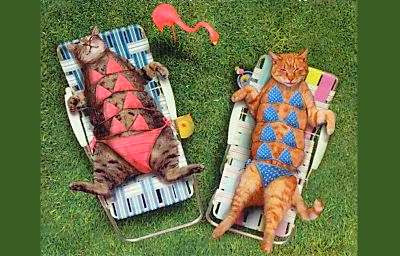 Two cats relax.