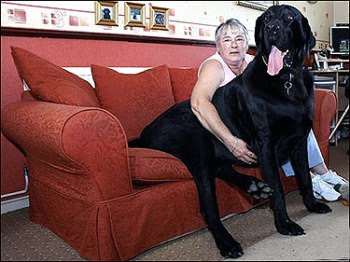 The huge black dog.