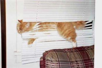 The cat has got stuck.