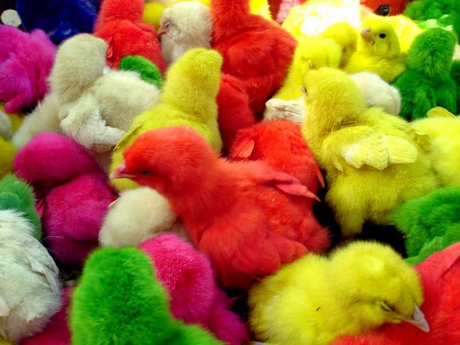Pollos surreales
