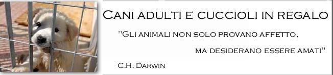 Adozione cani adulti e cuccioli in regalo in Puglia,anche di razza