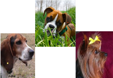 Why Would Anyone Want To Put Little Crystals On Their Dogs Ears I Just Kept Thinking What If The Dog Swallowed One