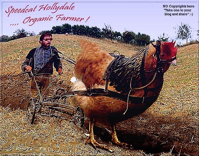 http://4.bp.blogspot.com/_8pBtwxra6_g/SsVxv8fpmoI/AAAAAAAAJZY/4m7K0VIMmVs/s640/huge+chicken+speedcat+hollydale.jpg