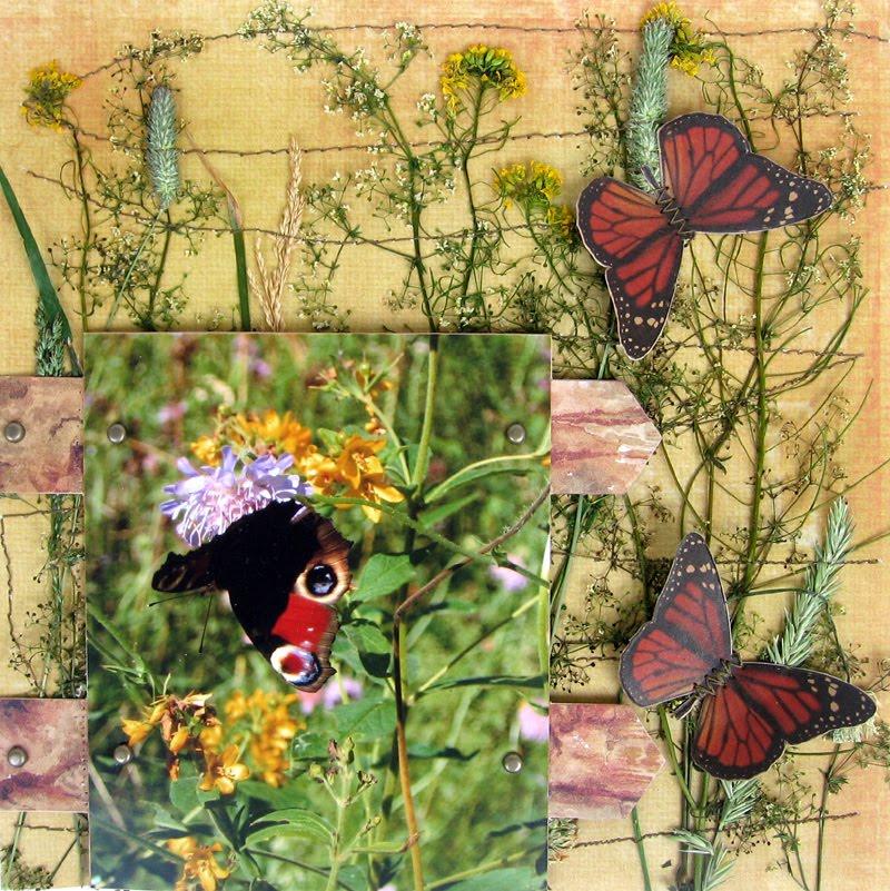 Картинки очень разные цветы в природе