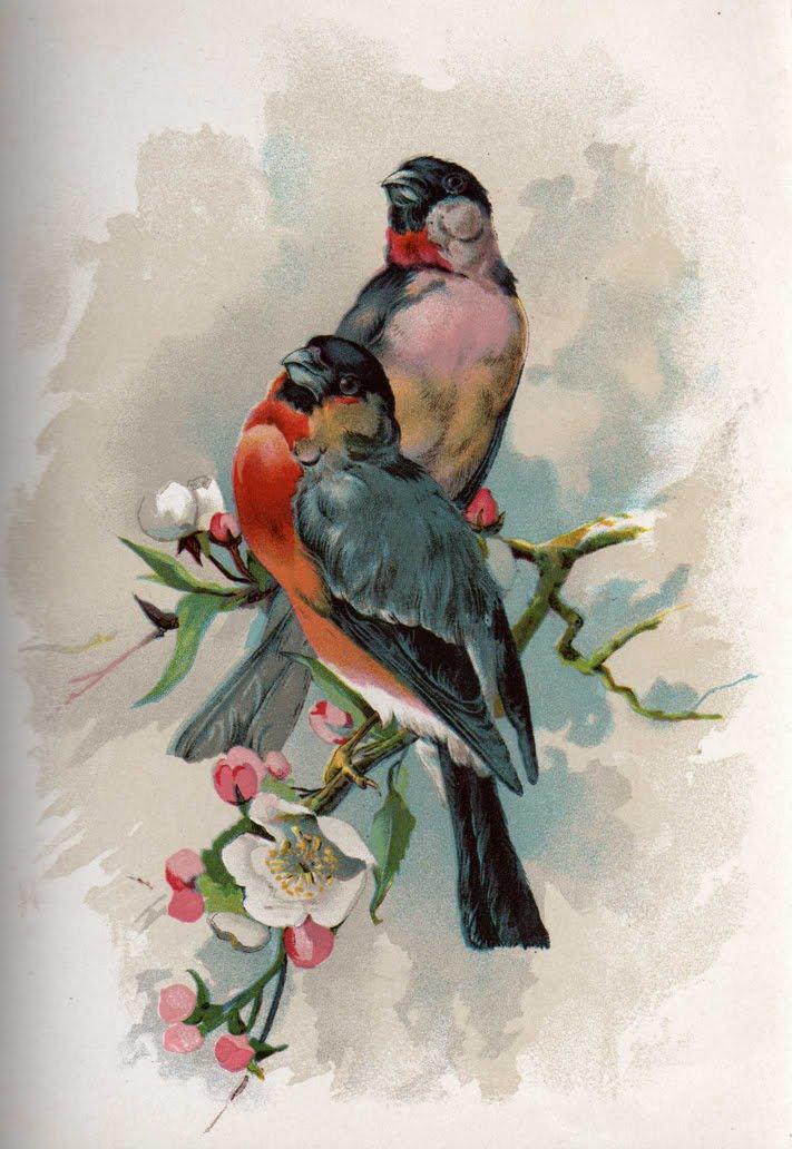 Картинки для декупажа птицы