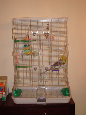 how to set up a birdcage for a cockatiel