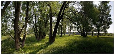 Лес возле реки
