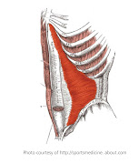 Your rectus abdominis concentrically flexes your lumbar spine (crunch .